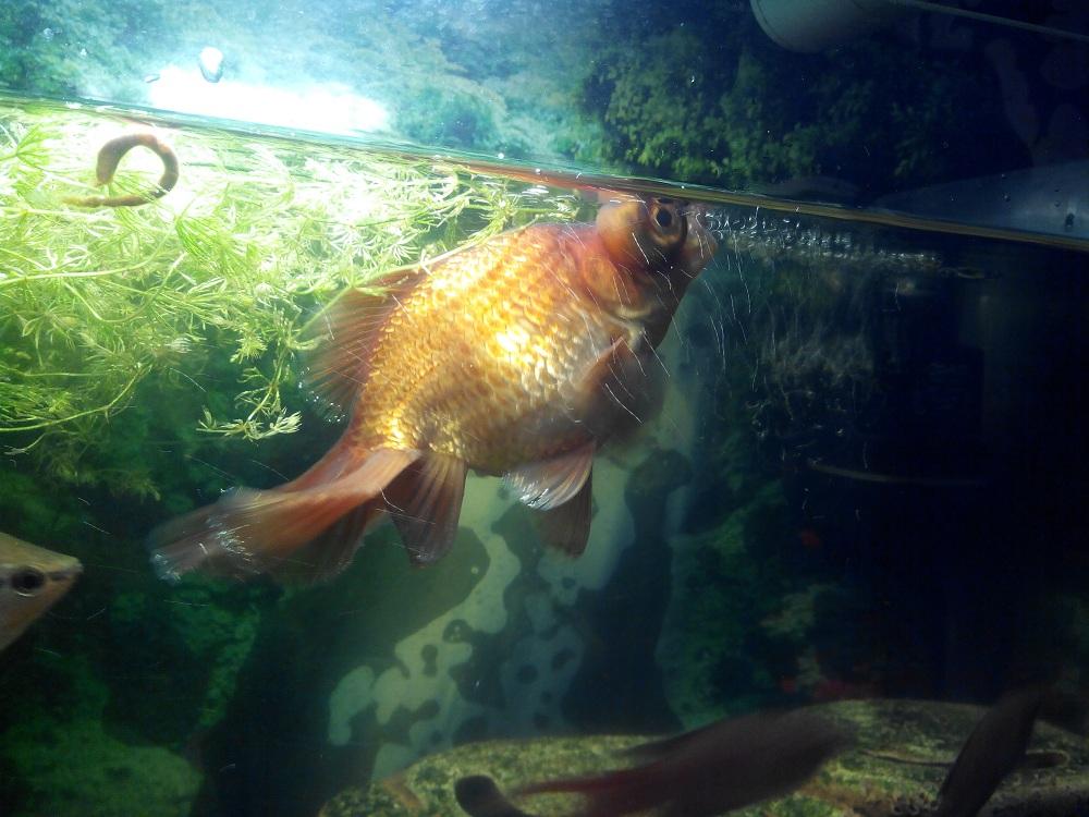 Телескоп решил стать золотой рыбкой