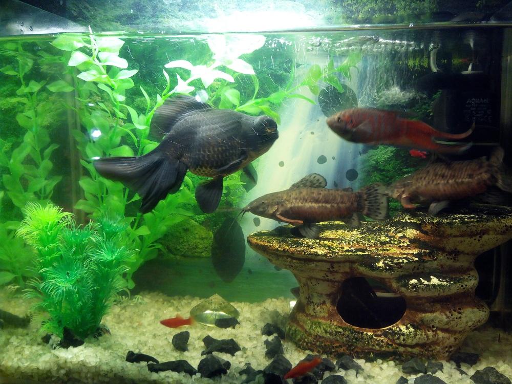 Искусственные растения в аквариуме